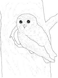 Free Printable Owl Mandala Coloring Pages Owl Coloring Page Barn Owl