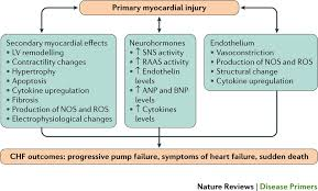 Pathophysiology Of Chf Figure 2 Pathophysiology Of Heart Failure