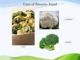 Essay on uses of flowers