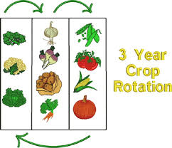 Crop Rotation Chart Vegetable Gardening Small Vegetable Garden Crop Rotation Possible But