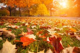 Fall Landscaping 3 Fall Lawn Care Tips Hrl Landscaping