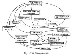 Nitrogen Cycle With Diagram Plant Physiology