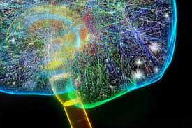 researchers neural wiring is similar to structure of online we really do have the internet on the brain researchers neural wiring is similar to structure of online networks