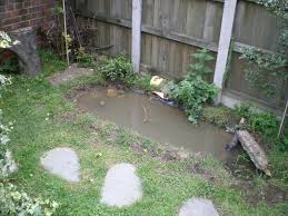 Small Picture Tiny City Pond Help Water features Homes for Wildlife The