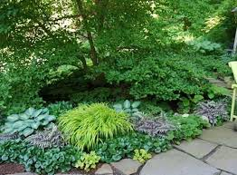 save outdoor shade garden plants picture