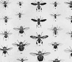 True Fly Chart Edwardian Entomology 1907 Natural History Rotogravure Illustration Of Insects To Frame Xxii Black White