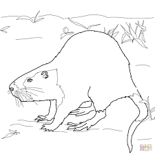 Small Picture Nutria Rat coloring page Free Printable Coloring Pages