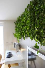 Dream House Updates  Indoor Climbing Walls U0026 The Hunt For House Climbing Plants Indoor