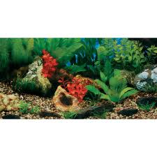 Decorazioni acquario dolce: piante acquaportal forum acquario