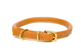 d h classic rolled leather dog collar in tan