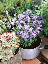 Kitchen Garden In Pots Learn How To Make Flower Containers At Home Hgtv