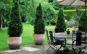 potted trees patio