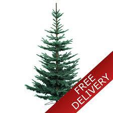 75u0027 Colorado Blue Spruce Artificial Christmas Tree With Clear Artificial Blue Spruce Christmas Tree