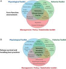 Venn Diagram Techniques Venn Diagram Of The Potential Toolkits Provided To Studies