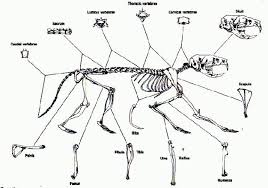 Owl Pellet Skeleton Reconstruction Chart Owl Pellet Bird Skeleton Chart Bedowntowndaytona Com