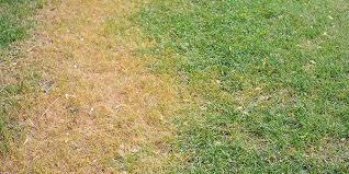 Dollar Spot Fungus Control Services In Michigan Lush Lawn