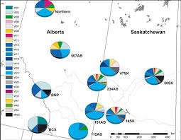 Pie Charts Indicate The Distribution Of White Tailed Deer