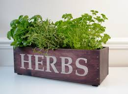 Hydroponic Kitchen Herb Garden I Love The Text And Font On Here For Making A Herb Planter I