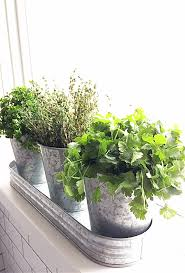 what a cute windowsill herb garden you can make your own diy one for your