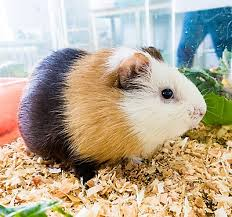 petsmart hamsters. Delighful Petsmart Traveling With Your Small Pet Bird Or Reptile In Petsmart Hamsters