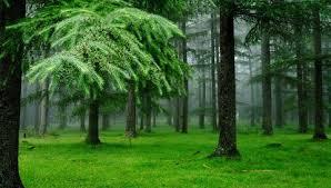 Реферат о хвойных растениях класс ДоклаДики Реферат о хвойных растениях 3 класс