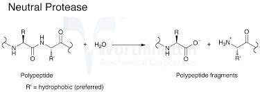 protease enzymen