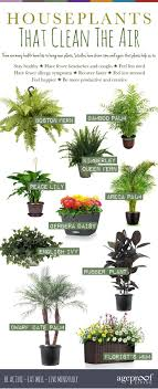 ... Home Design Ideas About Best Indoor Plants On Pinterest Good Images Of  House Shocking 87 Inspirations ...