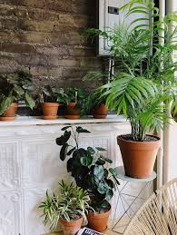 lighting indoor plants. led lights would work well either on a ledge like this or attached to blank lighting indoor plants o