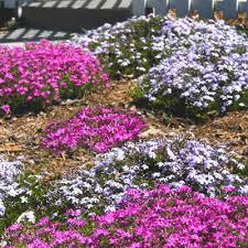 jewels of the spring garden border