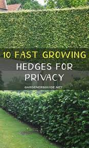 hedges landscaping fast growing hedge