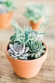 succulent arrangements #DIY succulent arrangements ...