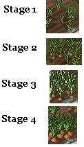 carrot plant stages. Delighful Stages Carrot Intended Plant Stages