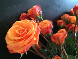 The Obituary for Mrs. Sheila Faye Haywood (Lee County) - AL Bugle