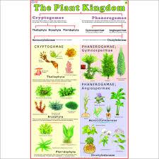 Plant Kingdom Classification Chart For Kids Plants Lessons Tes Teach