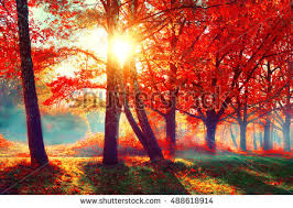 Image result for autumn season and orange leaves