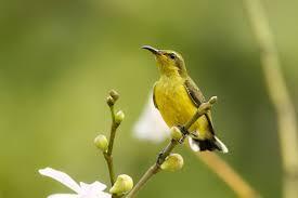 Cerita Burung Kecil dan Nabi Ibrahim