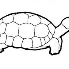 Small Picture Turtle Coloring Pages Printable For Turtle adult