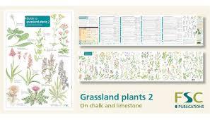Herb Plant Identification Chart Fsc Fold Out Id Chart Grassland Plants 2 Identification Guide