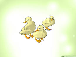 3 Ways To Hatch A Goose Egg Wikihow