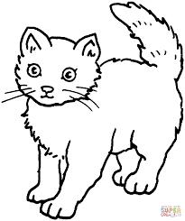 cat 25