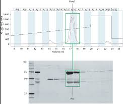 Protein Purification Chart Implementing A Dual Approach To Protein Characterization