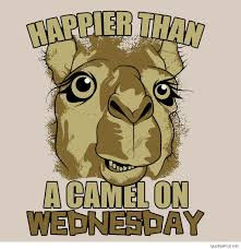 Hump Day Funny Quotes And Pics Daily Motivational Quotes