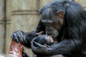 Banksy Dj Monkey Gorilla Chimp Canvas Picture Poster Print