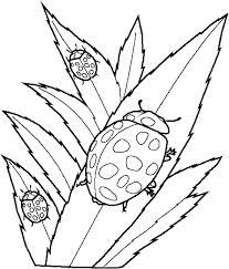 Lady Bug Coloring Sheet Ladybug Coloring Sheet Danielweb Me