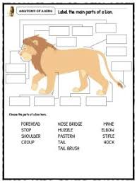 lion facts worksheets information for kids anatomy of a king