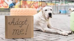 cute dog at shelter sitting next