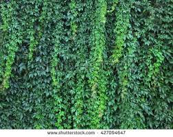 House Wall With Climbing Plants Stock Images  Image 30927834Climbing Plant