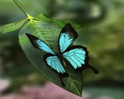 most beautiful butterflies in the world flying. The Six Most Beautiful Butterflies In World For Flying