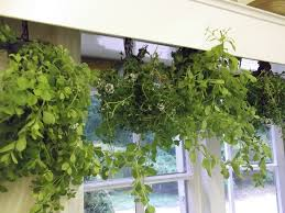 Small Picture Indoor Herb Garden Design
