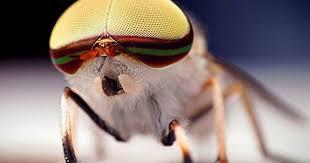 Todo sobre las moscas